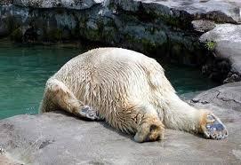 体調悪い白熊